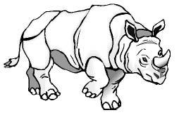 Носорог. Самый обыкновенный