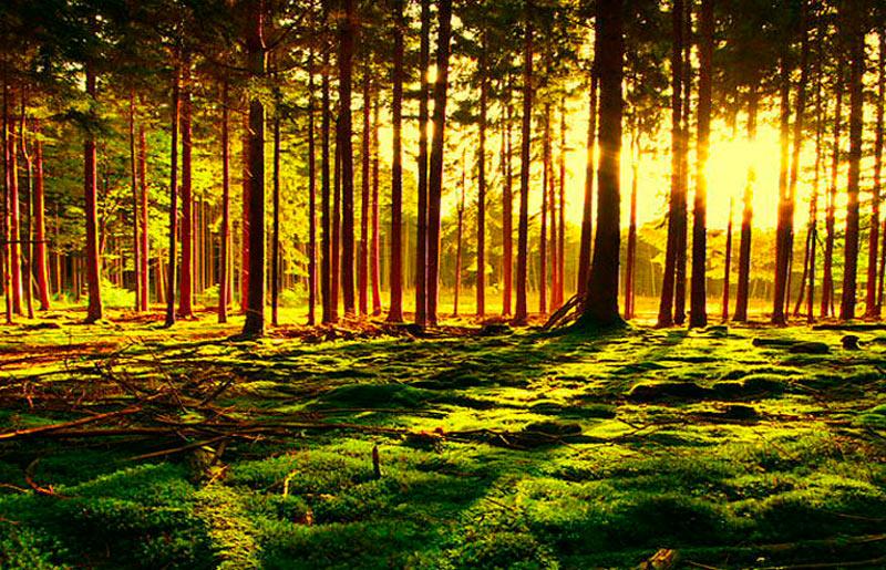 редкий лес