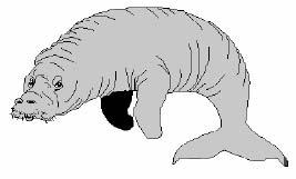 Тельфин