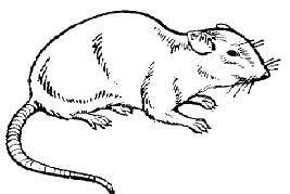 А! Вот куда девалась наша гигантская крыса!