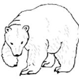 медведь-гипербореи