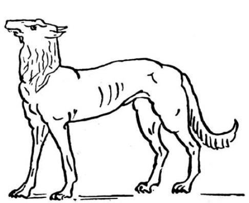 собака-Зевса