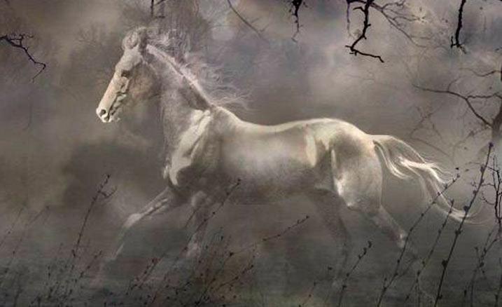 Теневая лошадь